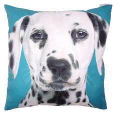 Decorative Dalmation Print Turquoise Cushion