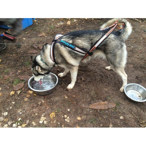 Sled Pulling Harness For Husky New Era Of Wiring Diagram