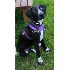 Hooner puppy harness